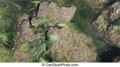 moss on the rocks of the pond
