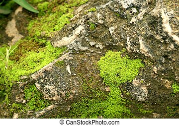 Moss on the stone floor
