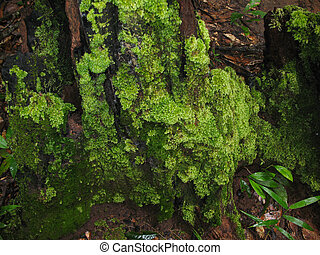 Moss on the tree trunk