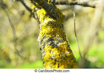 Moss on tree trunk, background image. Lichen with branch in forest.