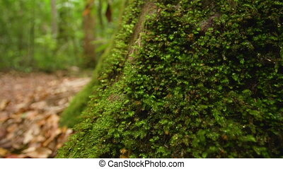 Moss on tree's branch - A macro shot of moss on tree's...