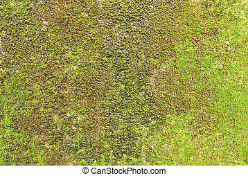 Moss on wall texture background.