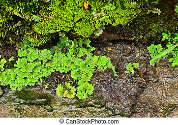 Moss on wet stone