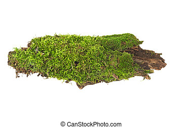 moss on wood on a white background
