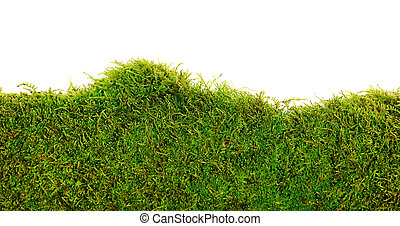 Moss - Background of moss on white background