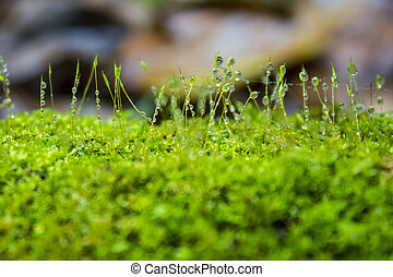 Moss - Drops of water on the moss