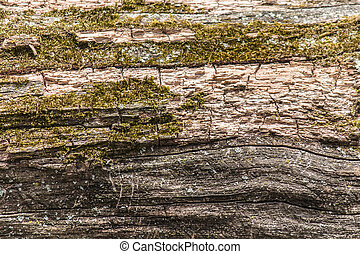 Moss texture a dead tree - Interesting patterns created by...