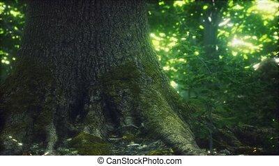 mossed, forêt, terrestre, primordial