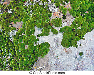 Mosses and lichens, close-up