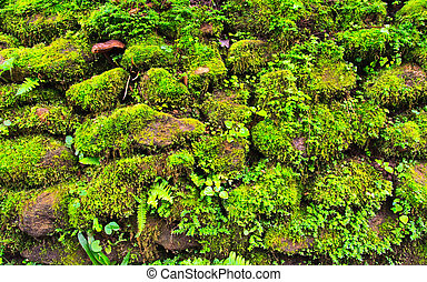 Mosses on the rock