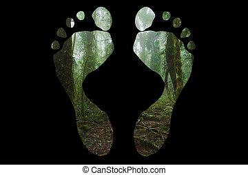 Mossy australian rainforest