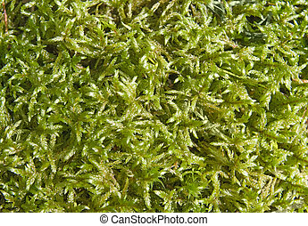 Close-up of sunlighted mossy ground for texture