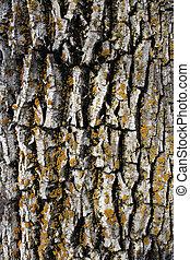 Mossy bark