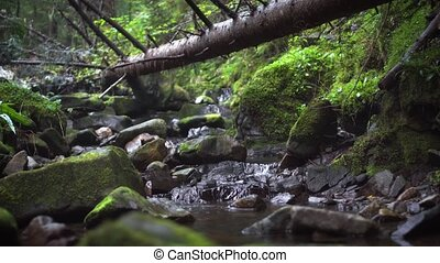 Water burbles around mossy boulders and beneath a log in this stream through a forest in Ukrainian Carpathian Mountains. Video 4k with sound.