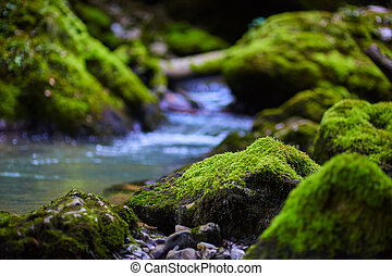 Mossy boulders in a river