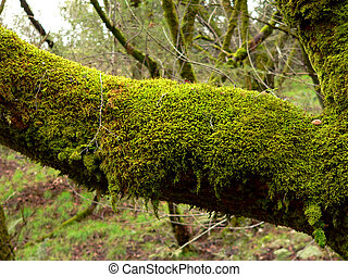 A mossy branch in a wooded area.