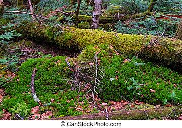 Mossy Fallen Tree, Nagano Prefecture/Japan, 2013/6/6.