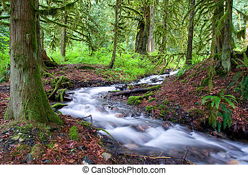 Mossy Forest Stream - A small creek winds through a mossy ...