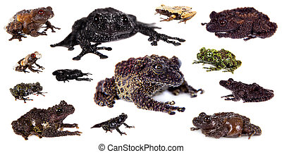 Mossy Frogs set on white - Mossy Frogs set isolated on white...