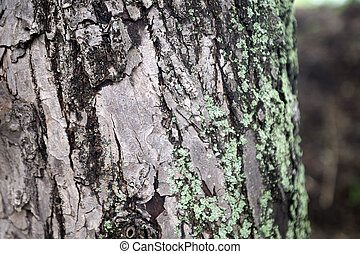 Mossy green gray tree trunk texture background