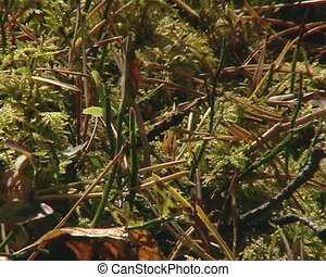Mossy ground with spines and oak leaf with sunlight waterdrops.