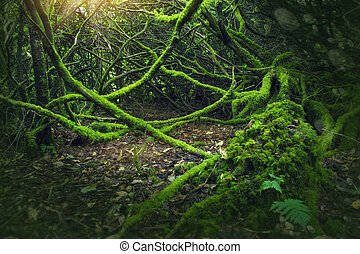 mossy, hout, in, ierland