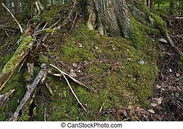 Mossy Nature