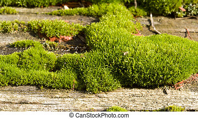 Mossy old log close-up