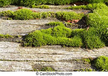 Mossy old log