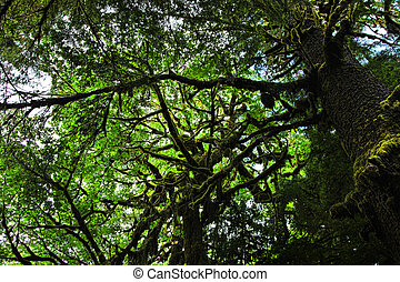 Mossy Rainforest Branches