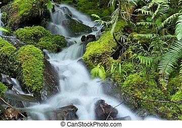 Mossy Rainforest Creek