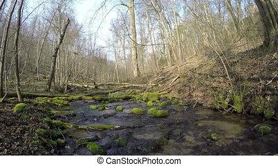 stream creek flow through a dense woodland. 4K - mossy rocky...