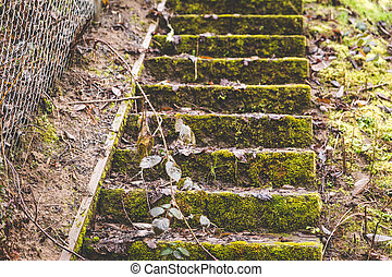 Mossy Steps in the Pacific Northwest
