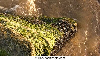 Mossy stone in the sea. Water in slow motion. How does moss...