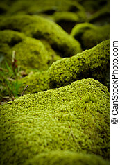 Background Of Moss Covered Stones In A Forest