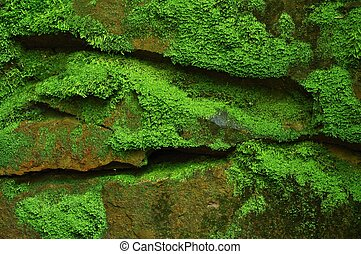 Mossy stones - Wet stone covered with fresh bright green ...