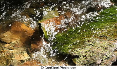 Closeup of mossy sunlit stream. Crystal clear spring water. Fundy National Park, New Brunswick, Canada.