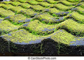Mossy tiled roof - Bright green of mossy tiled roof in rural...