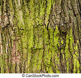 Closeup of mossy tree bark for background