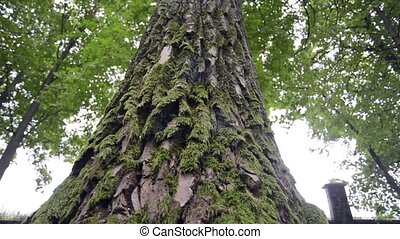 mossy tree bottom - powerful tree bottom with thick green...