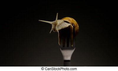 Most live snail on a fork dining. - A live snail on a dinner...
