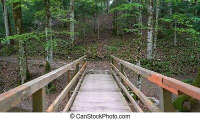 most, osobisty, przejście, drewniany, przez, las, prospekt,...