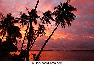 mostrado silhueta, coqueiros, ligado, um, praia, em, pôr do sol, ofu, ilha, tonga