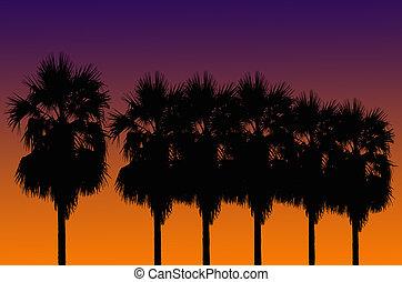 mostrado silhueta, de, árvore coco, durante, amanhecer