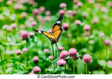 motýl, dále, květiny