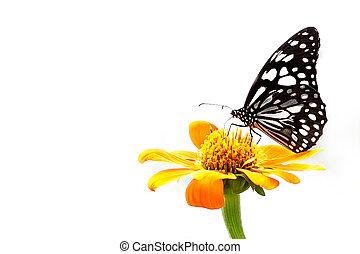 motýl, květ, barevný
