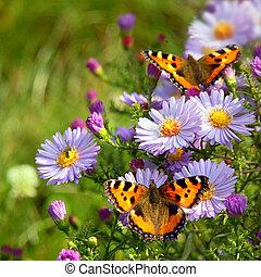 motýl, květiny, dva
