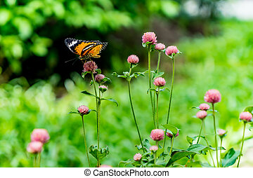 motýl, květiny