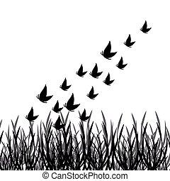 motýl, silueta, s, pastvina, osamocený, oproti neposkvrněný, grafické pozadí
