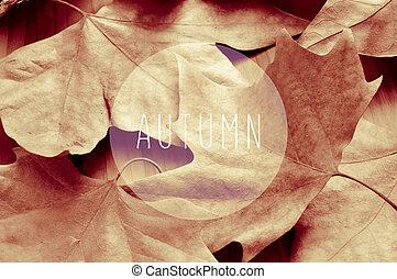 mot, automne, feuilles, sépia, séché, toning